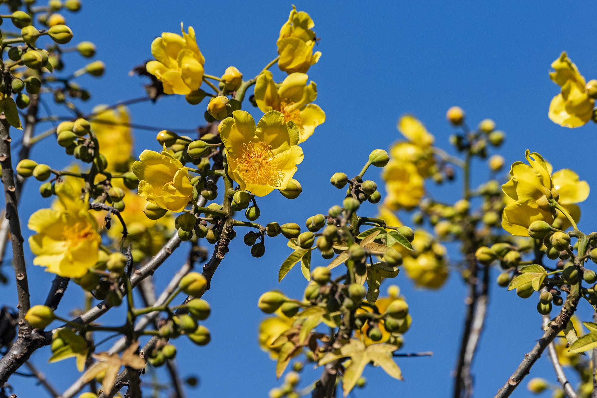 El Floral El Salvador